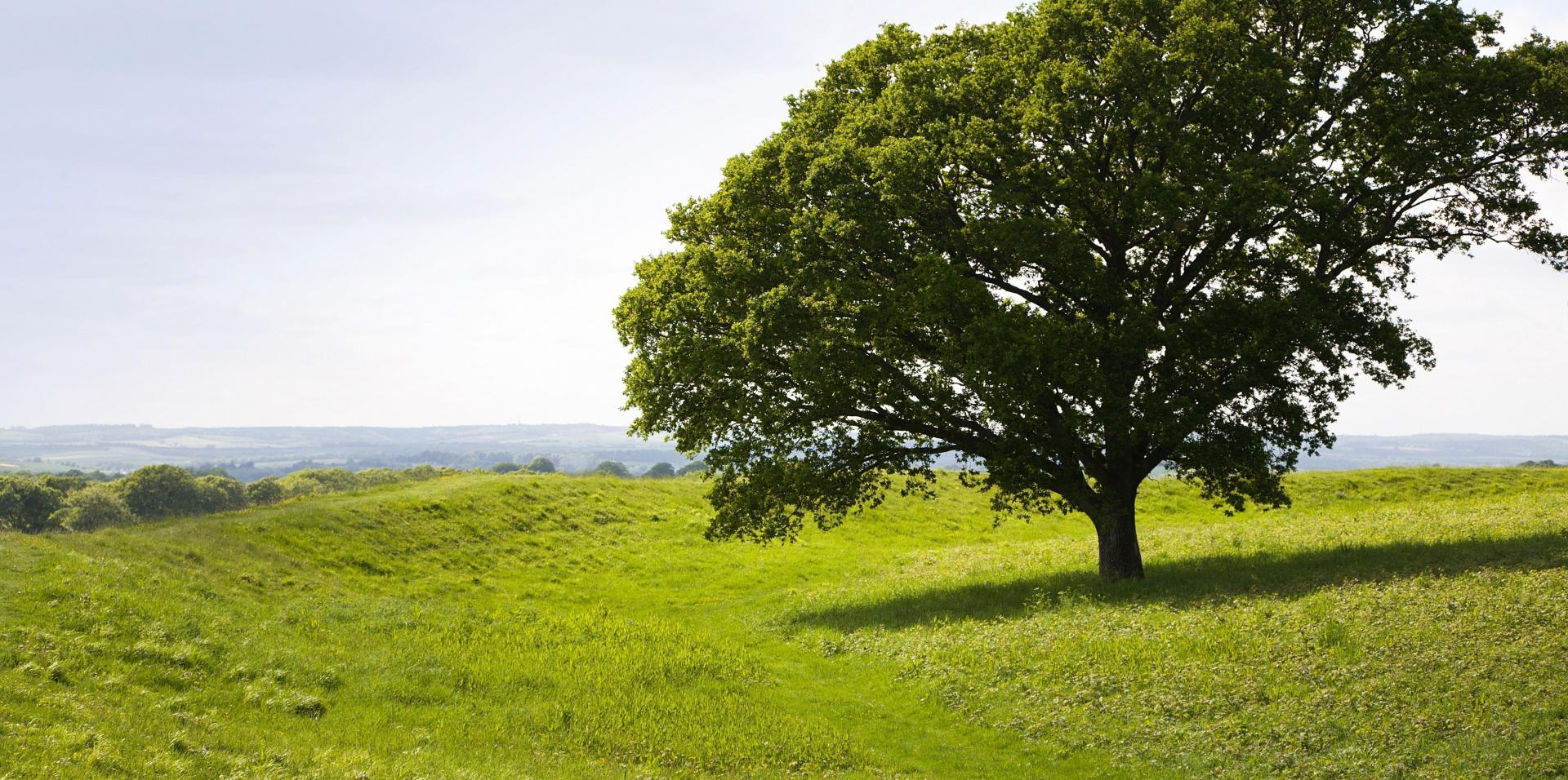 baner z drzewem